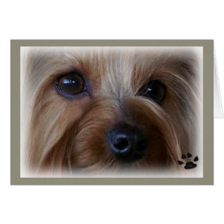 Yorkie Sad Eyes Card