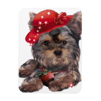 Yorkie Strawberry Magnets and buttons