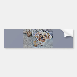Yorkie Yorkshire Terrier Colored Bumper Sticker