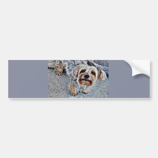 Yorkie Yorkshire Terrier Colored Bumper Sticker
