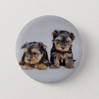 Yorkies 6 Cm Round Badge