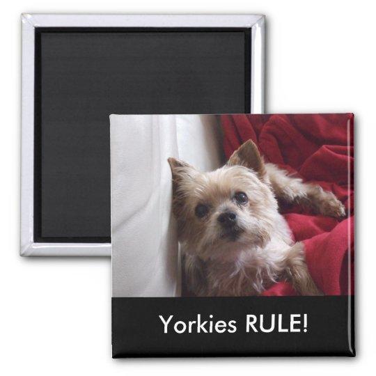 Yorkies RULE! Refrigerator Magnet