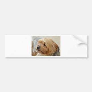 Yorkkshire Terrier Jake Bumper Stickers
