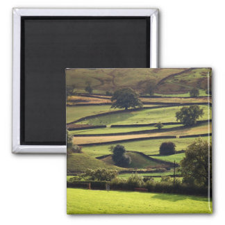 Yorkshire dales in evening sunlight square magnet