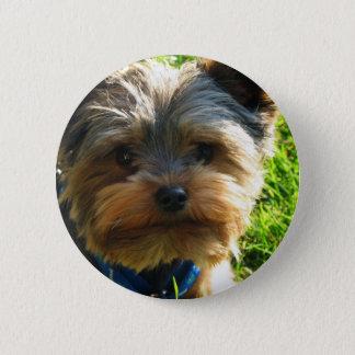 Yorkshire Terrier Button