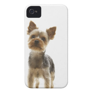 Yorkshire Terrier Case-Mate iPhone 4 Cases
