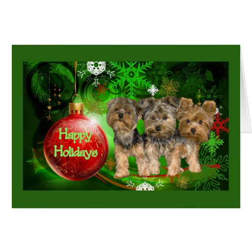 Yorkshire Terrier Christmas Card Red Ball