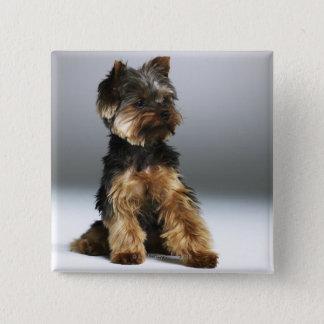 Yorkshire terrier, close-up 15 cm square badge