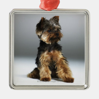 Yorkshire terrier, close-up christmas ornament