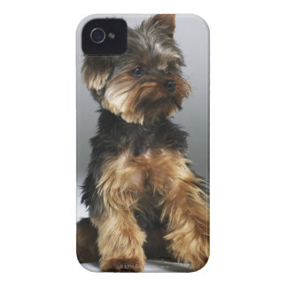 Yorkshire terrier, close-up iPhone 4 case