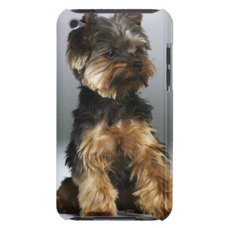 Yorkshire terrier, close-up iPod touch case