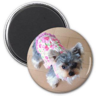 Yorkshire Terrier/Dog 6 Cm Round Magnet