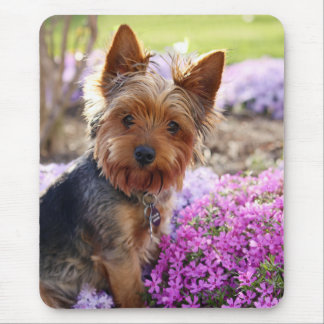 Yorkshire Terrier dog beautiful photo mousepad