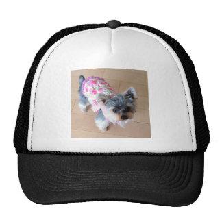 Yorkshire Terrier/Dog Cap