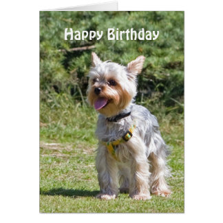 Yorkshire Terrier dog custom birthday card