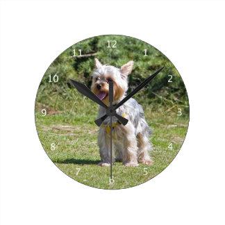 Yorkshire Terrier dog cute beautiful clock