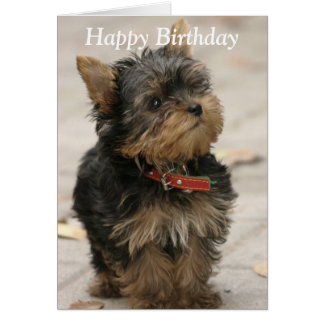 Yorkshire Terrier dog photo custom birthday card
