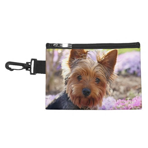 yorkie accessory yorkshire terrier dog yorkie cute beautiful photo 9298