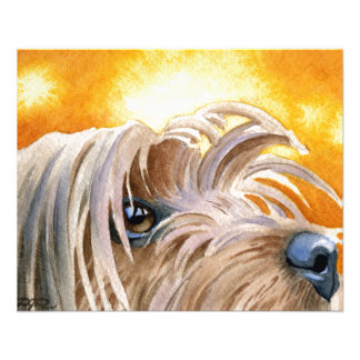 Yorkshire Terrier Flyer