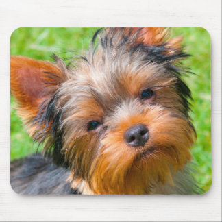 Yorkshire Terrier looking up Mouse Pad