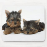 Yorkshire Terrier Mousemats