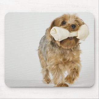 Yorkshire Terrier on white background walking Mouse Mat