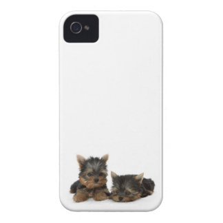 Yorkshire Terrier Puppies iPhone 4 Cover