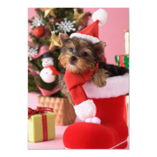 Yorkshire Terrier Puppy and Christmas Card