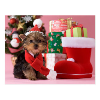 Yorkshire Terrier Puppy and Christmas Postcard