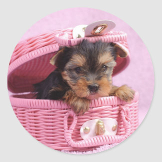 Yorkshire terrier puppy classic round sticker