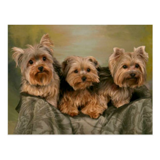 Yorkshire Terrier Puppy Dogs Blank Postcard