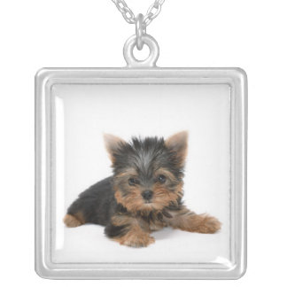 Yorkshire Terrier Puppy Necklace
