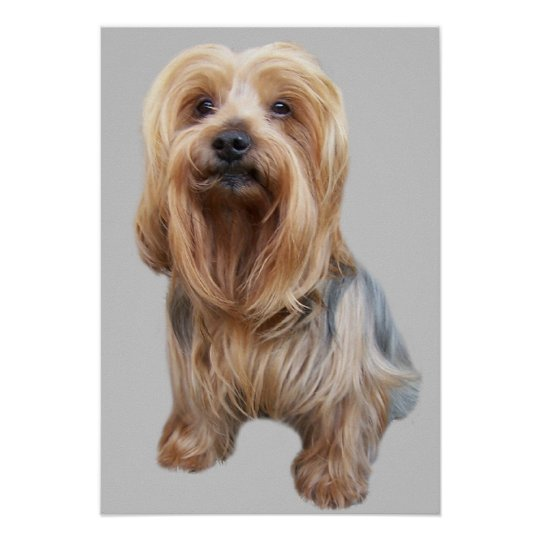 Yorkshire Terrier So Cute Print