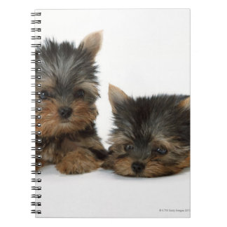 Yorkshire Terrier Spiral Notebook