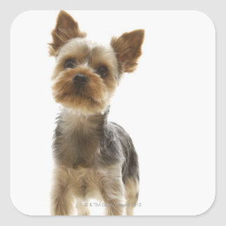 Yorkshire Terrier Square Sticker