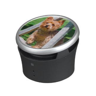 Yorkshire Terrier standing in a wagon wheel Speaker