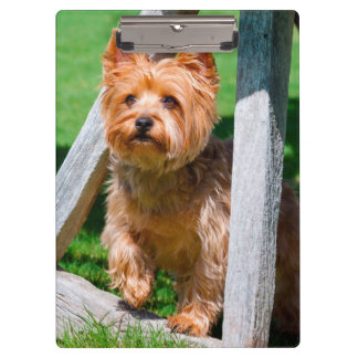 Yorkshire Terrier standing in a wagon wheel Clipboard