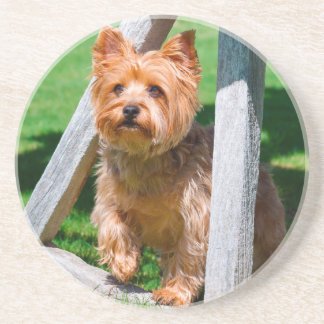 Yorkshire Terrier standing in a wagon wheel Coaster