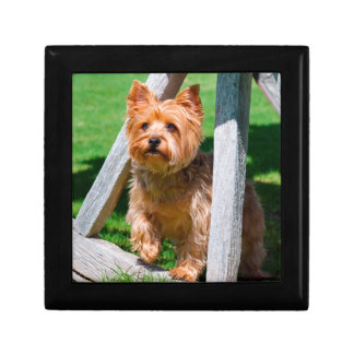 Yorkshire Terrier standing in a wagon wheel Gift Box