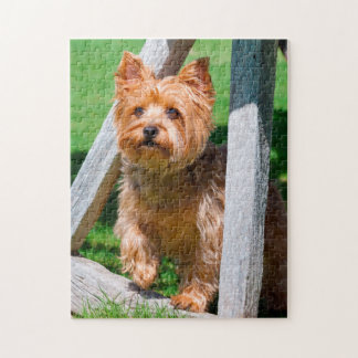 Yorkshire Terrier standing in a wagon wheel Jigsaw Puzzle