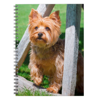 Yorkshire Terrier standing in a wagon wheel Notebooks
