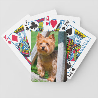 Yorkshire Terrier standing in a wagon wheel Poker Deck