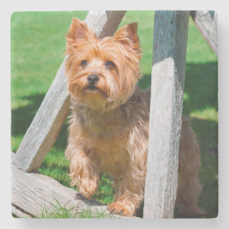 Yorkshire Terrier standing in a wagon wheel Stone Coaster