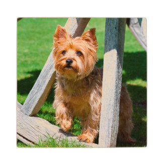 Yorkshire Terrier standing in a wagon wheel Wood Coaster