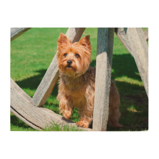 Yorkshire Terrier standing in a wagon wheel Wood Wall Decor