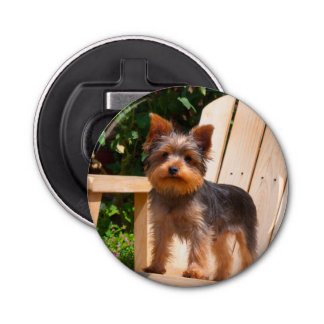 Yorkshire Terrier standing on wooden chair