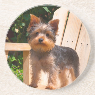 Yorkshire Terrier standing on wooden chair Coaster
