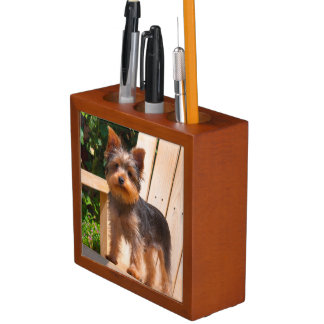 Yorkshire Terrier standing on wooden chair Desk Organiser