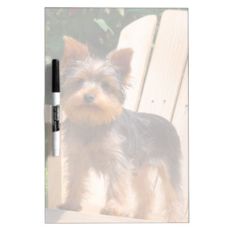 Yorkshire Terrier standing on wooden chair Dry Erase Board