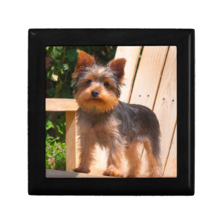 Yorkshire Terrier standing on wooden chair Gift Box